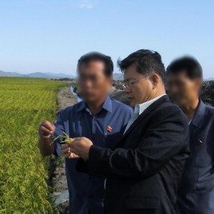Detained pastor Hyeon Soo Lim looks over one of the Light Presbyterian Church's agricultural projects in North Korea. (Photo courtesy of Light Presbyterian Church)